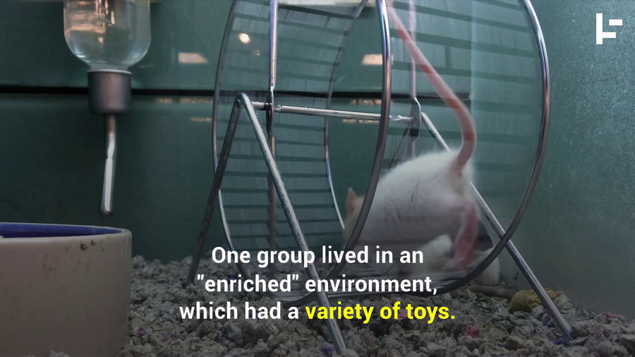 Rats Learned to Drive Tiny Cars to Cope with Their Stress