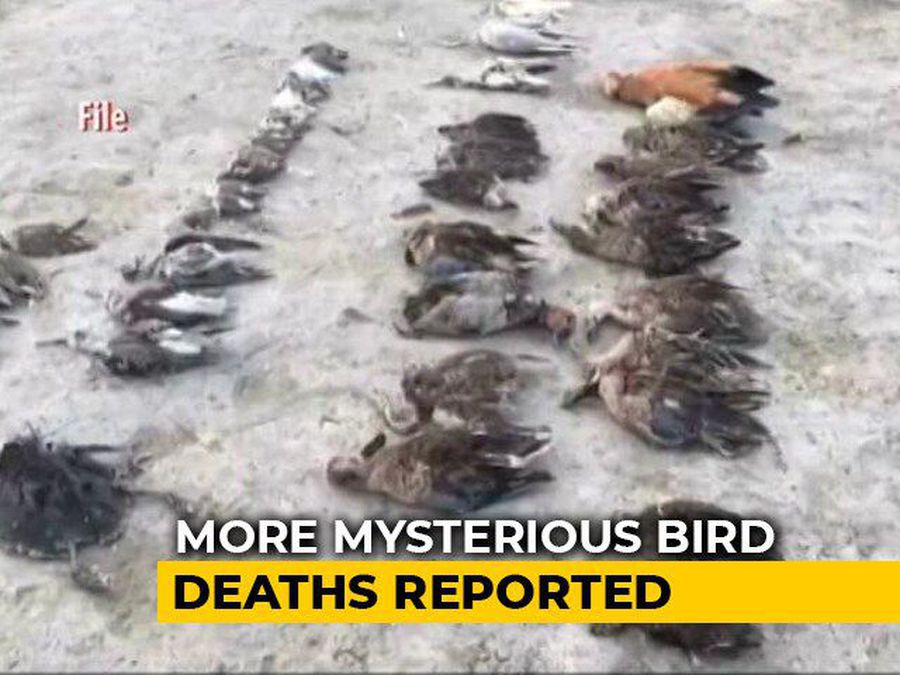 Over 10,000 Birds Found Dead Near Rajasthan Lake In A Week
