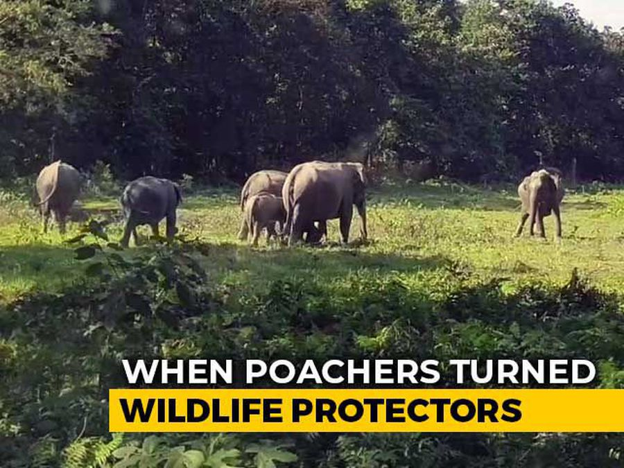 How Poachers Turned Wildlife Protectors In Assam's Manas National Park