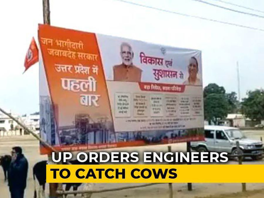 For Yogi Adityanath Visit, UP Orders Engineers To Catch Cows, Retracts