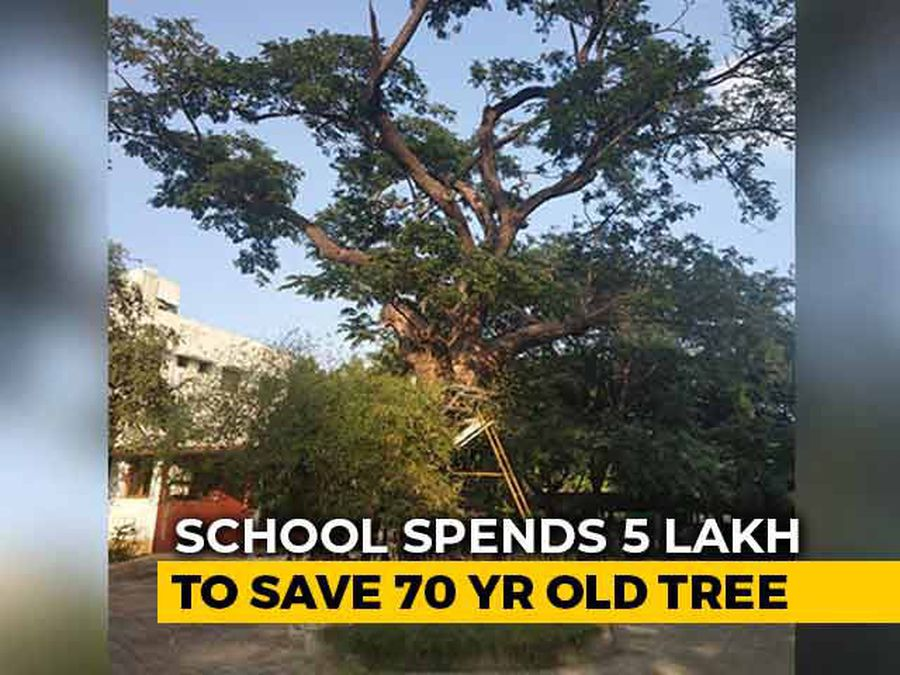 Chennai School Spends Rs 5 Lakh to Save Old Tree.