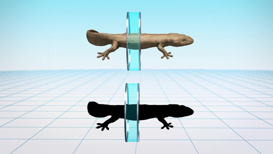 Newly identified salamander species may be the world's largest amphibian