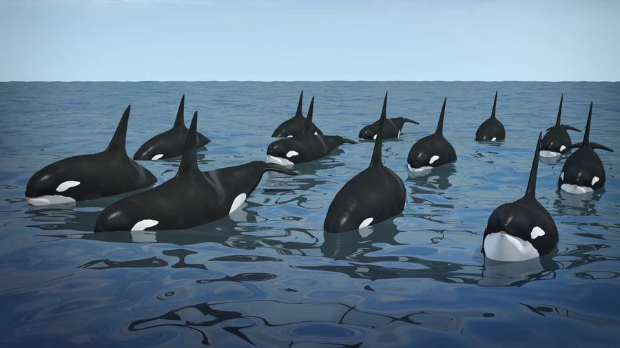 NOAA proposes plan to expand killer whale habitat