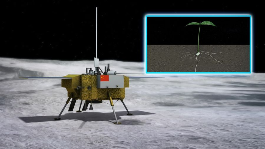China lunar lander grows cotton plant on the moon