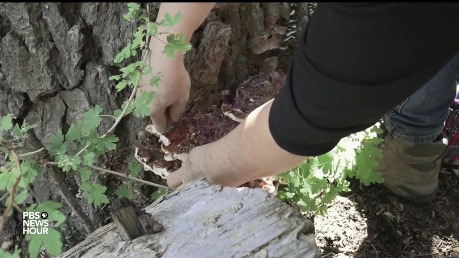 These Forest Fungi Are A Bounty For Arizona Mushroom Hunters