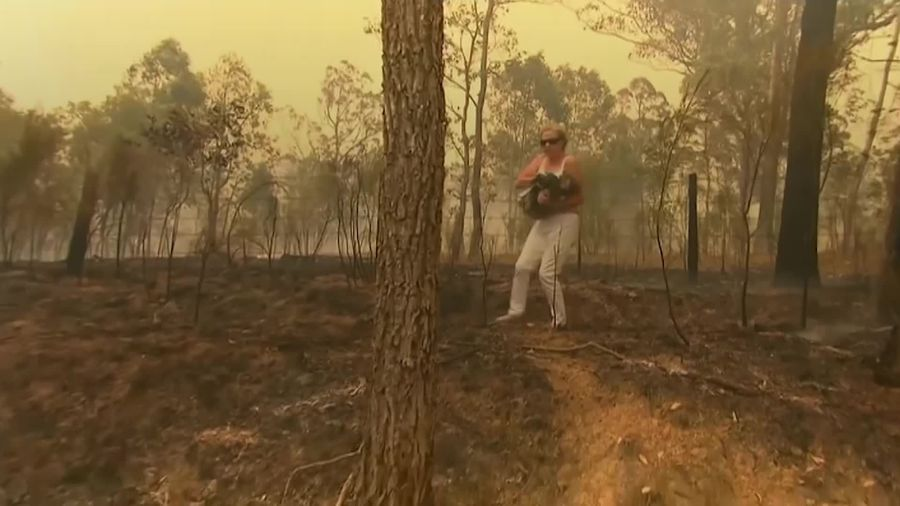 Koala rescued from wildfires by passerby