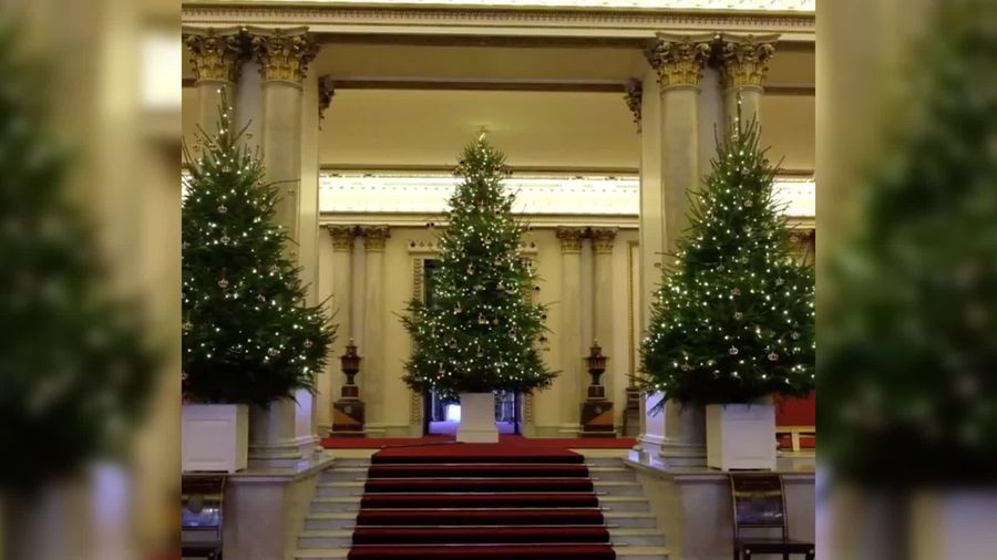 Christmas trees arrive at Buckingham Palace