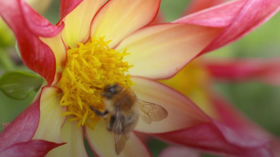 World Bee Day: Why are they so important?