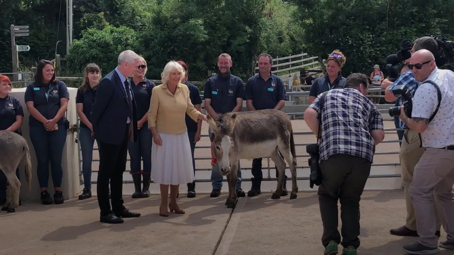 Duchess of Cornwall visits Devon donkey sanctuary