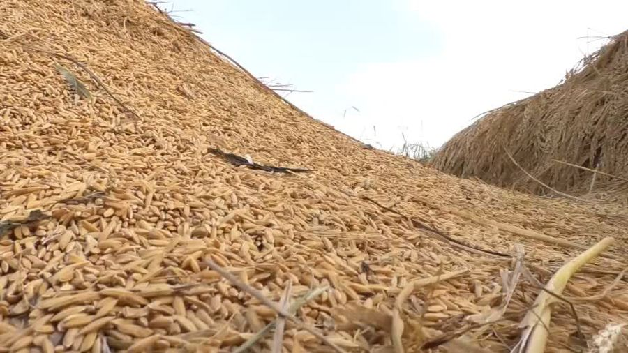 Nigerian rice farmers fall short after borders close