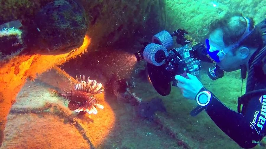 A delicious solution to Cyprus' lionfish problem