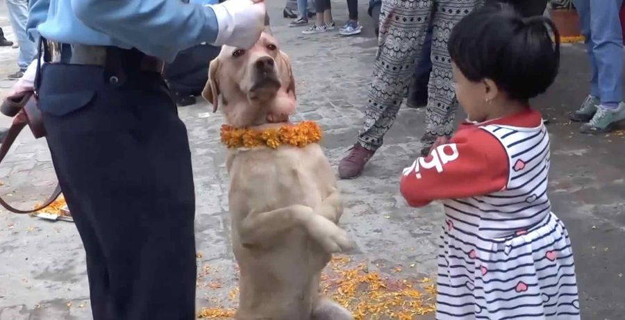The Canine Division - police dogs celebrated during traditional festival