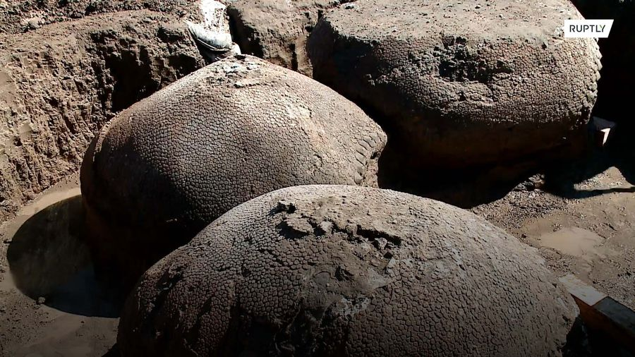 Car-sized ancient armadillos found in Argentine riverbed