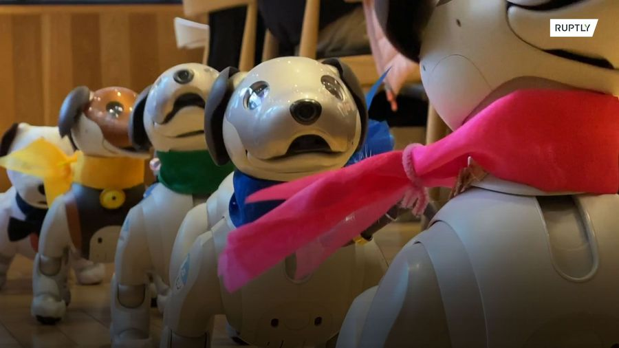 Robo-dogs go mutts for weekly Aibo play dates at Tokyo cafe