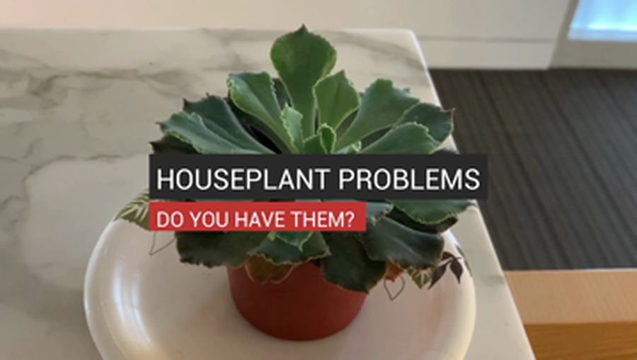 Do You Have Houseplant Problems?