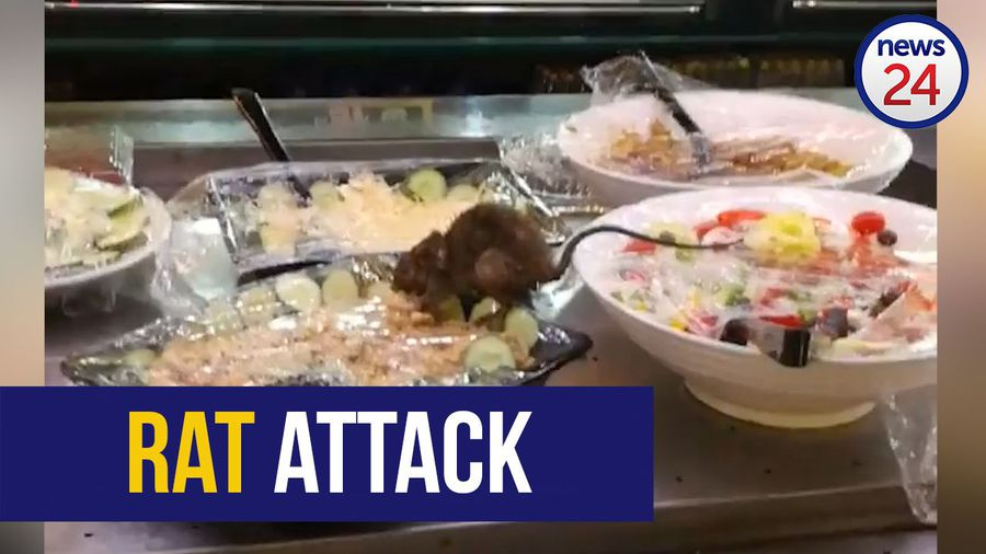 WATCH: Rat feasts at salad bar of Food Lover's Market in Diepkloof Square