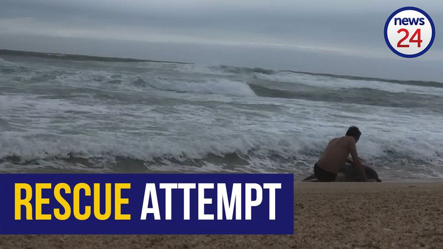 WATCH: Man desperately tries to save beached dolphin