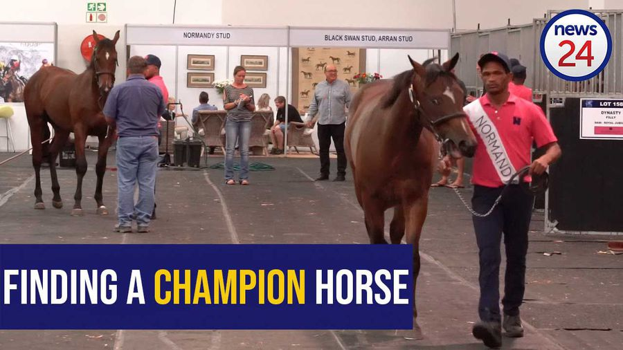 WATCH: What makes a champion race horse?