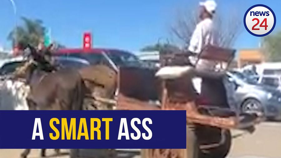 WATCH: Donkey cart driver demonstrates pro parking skills