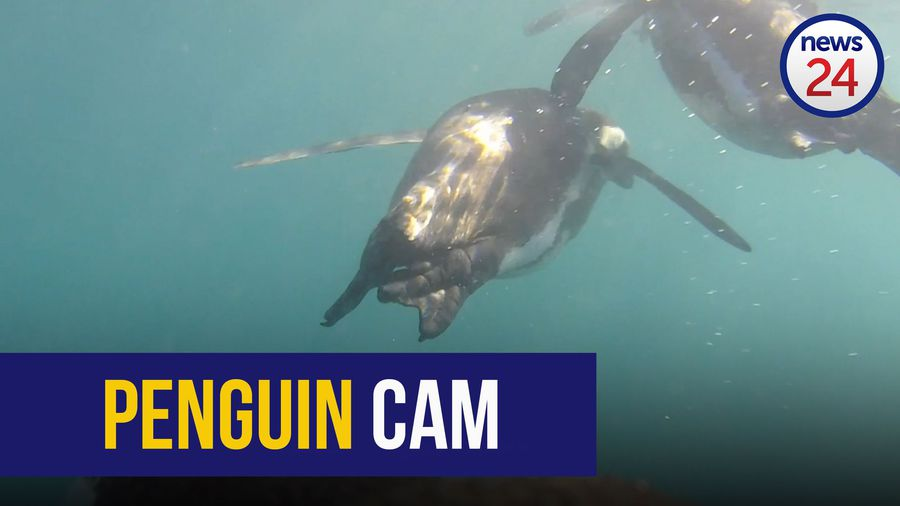 WATCH: The secret lives of penguins at sea revealed