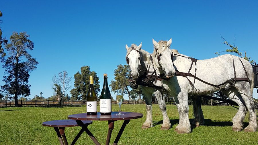 Horsing Around in the Plett Winelands