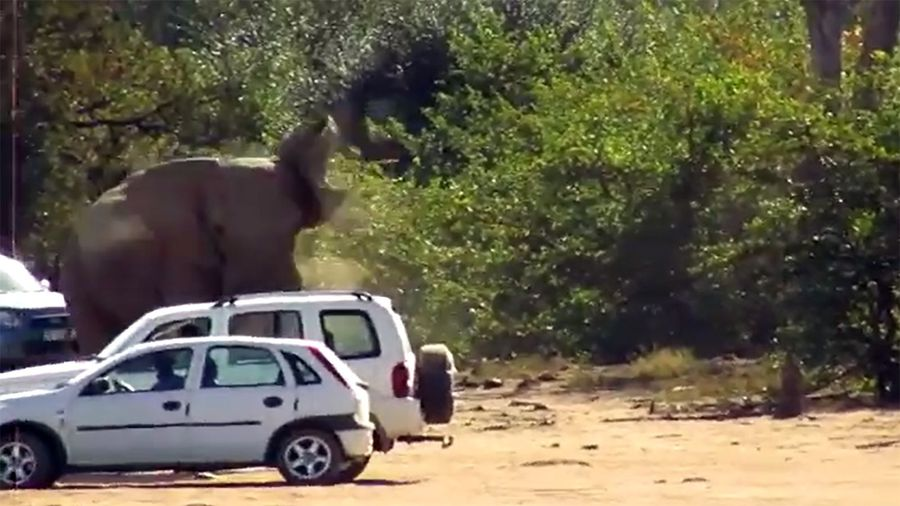 Kruger tourists with nerves of steel hold steady in elephant mock charge