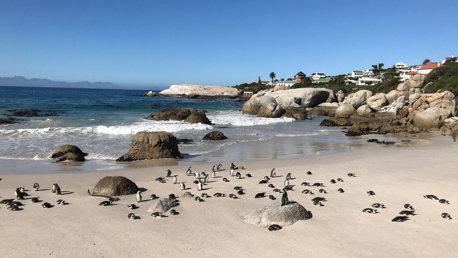 This unique, family stay in Simon's Town leads right onto the famous Boulders penguin walk