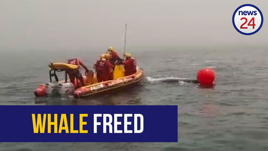 WATCH | SAWDN frees humpback whale from fishing rope in Lamberts Bay
