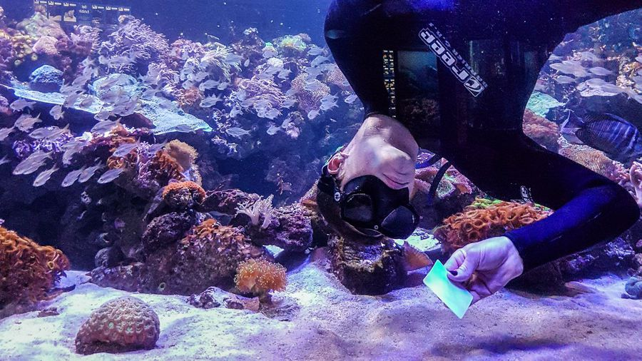Behind-the-scenes at Two Oceans Aquarium: What's on the menu
