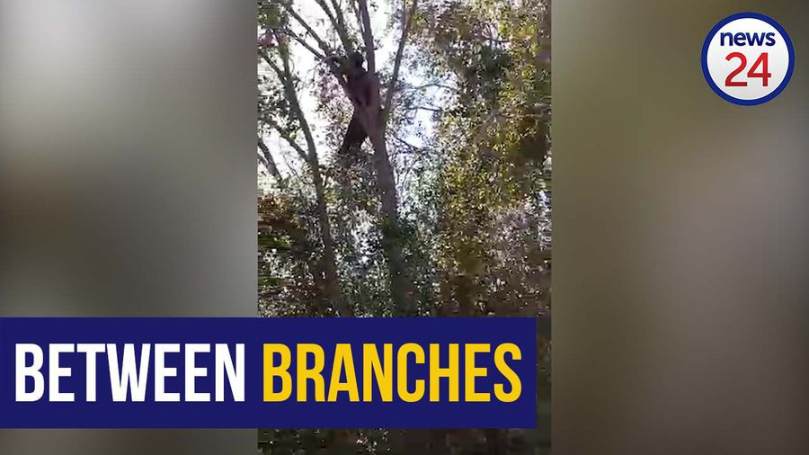 WATCH | Naked man rescued from tree after bizarre 18 hour standoff with police
