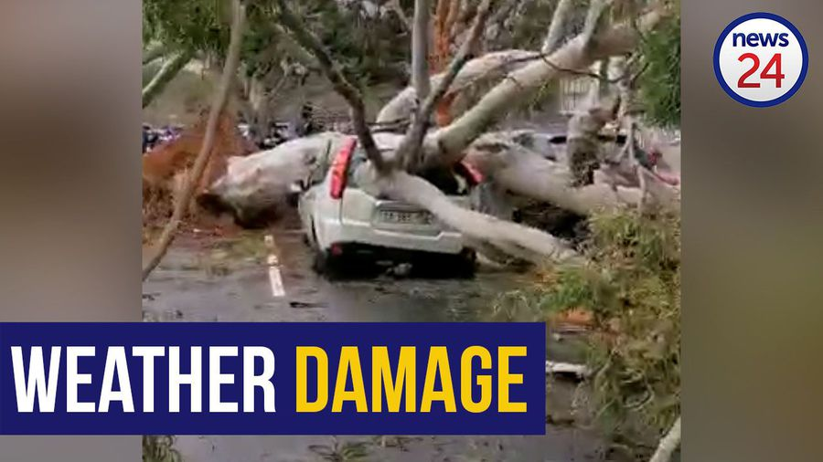 WATCH | Cape Town's cold front leaves car damaged as gale force winds uproot trees