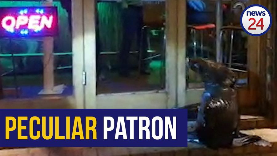 WATCH | Exhausted seal bangs on door of Cape Town restaurant
