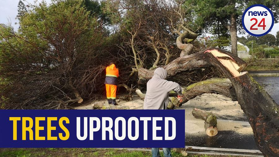 WATCH   Storm batters Cape Town, strong winds uproot trees