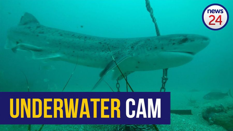 WATCH | Fishing community helps capture footage of marine life with special underwater cameras
