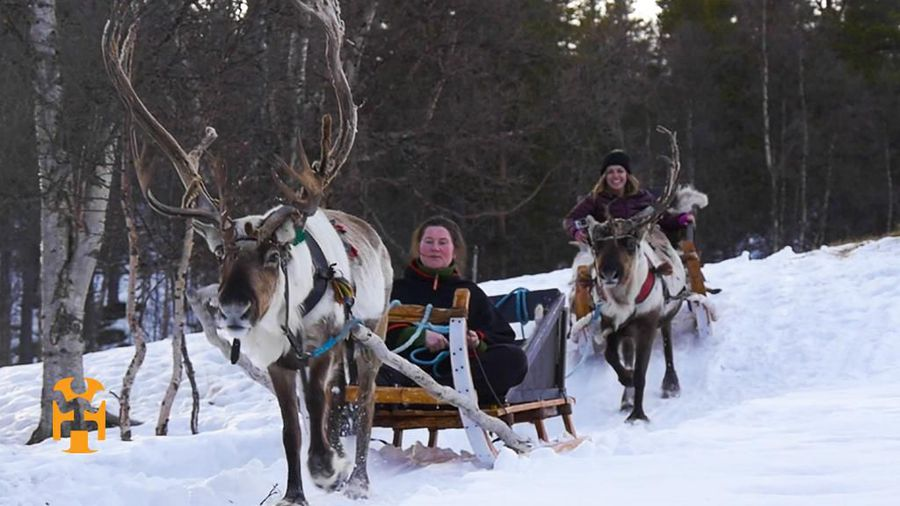 Reindeer Sledding in Røros