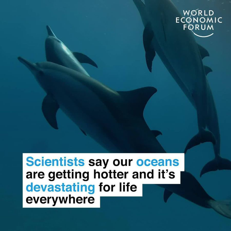 Scientists say our oceans are getting hot and it's devastating for life everywhere