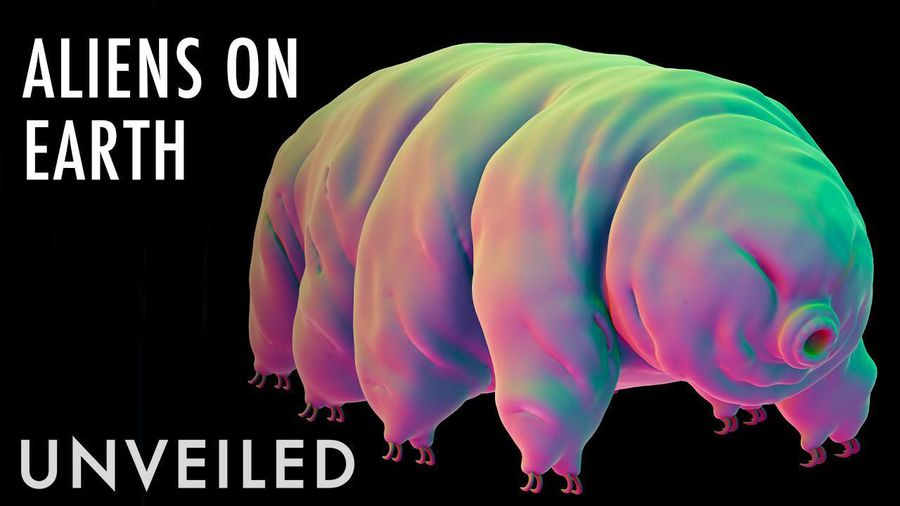 What If Tardigrades Are Alien Life Forms?   Unveiled