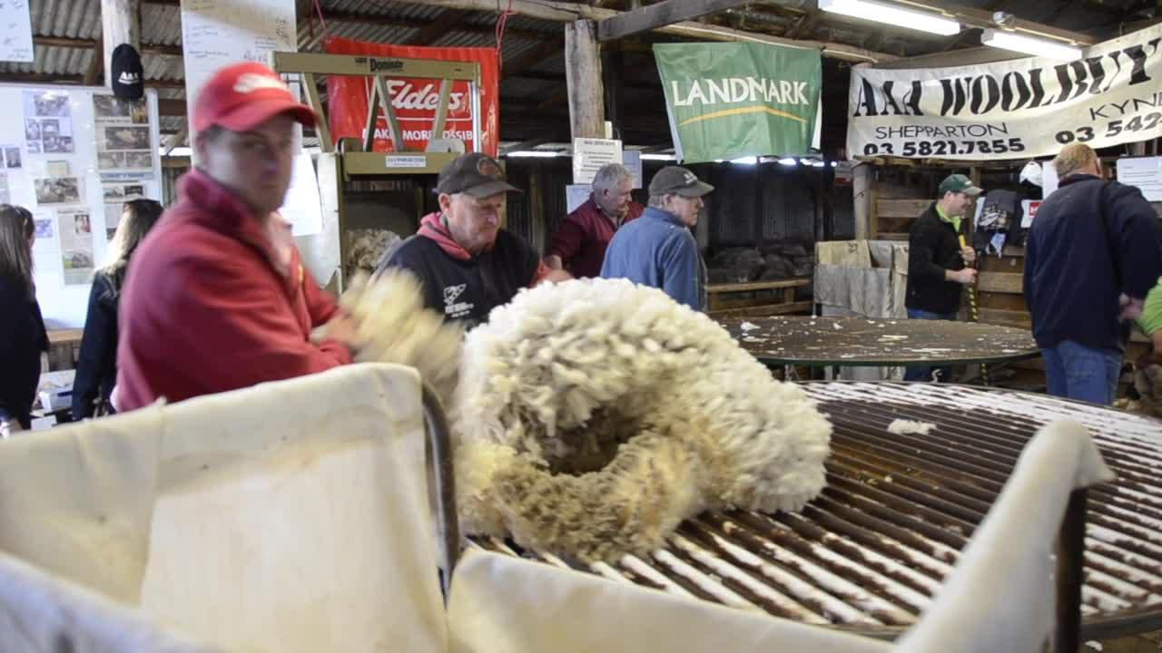 Charity Shearing Day