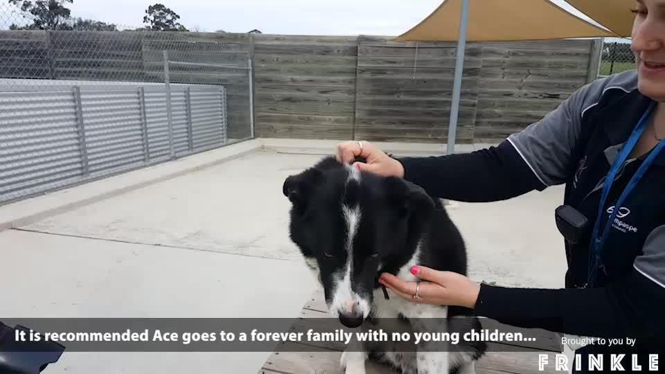 Give a dog a home - September 6
